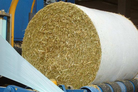Round bales formed from barley WCS