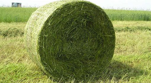 Round bales of grass silage
